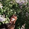 Наталья, 37, г.Калининград